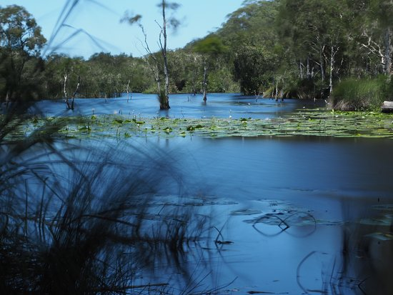 Urunga Wetlands Boardwalk