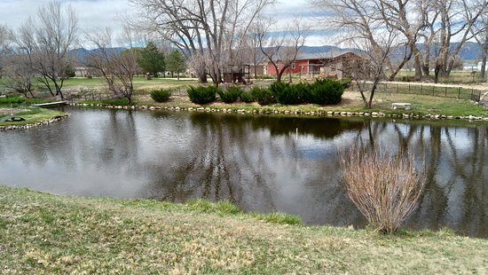 ‪‪Florence‬, קולורדו: Duck pond on property (Early Spring) ‬