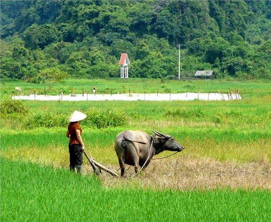 Cat Ba Trip: rice field in Viet Hai