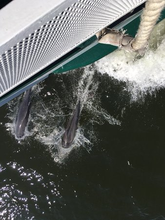 Charleston Harbor History Day-Time or Sunset Boat Cruise: Dolphins accompany our cruise