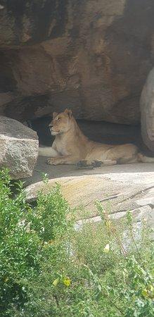 5 Days Tanzania safari Picture