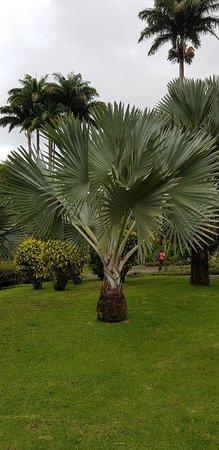 Jardin de Balata: Jardin de Balata