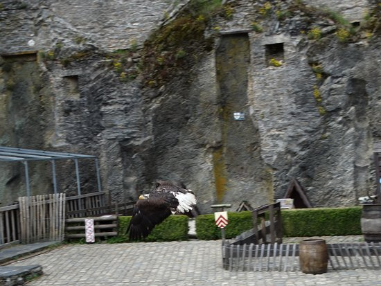 Chateau de Bouillon: Kasteel Bouillon vogelshow