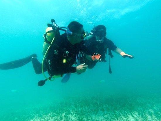 Cayo Santa Maria, Cuba: Excursión Buceo Recreativo. Marina Gaviota Cayo Coco