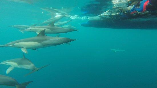 Dolphin Swim Australia