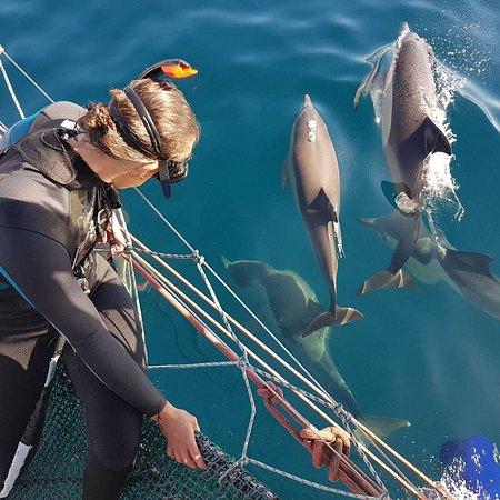 野生海豚共游之旅