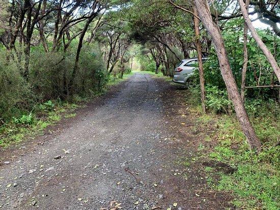 Вайрарапа, Новая Зеландия: Corner Creek Campsite, Ocean Beach Road, Wairarapa