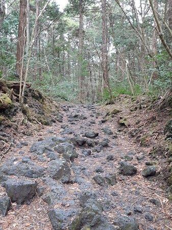 Aokigahara Forest: hardened lava formation