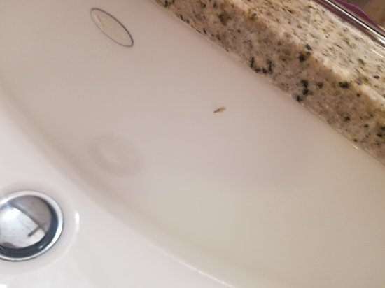 Bug in sink