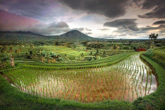 Bali Tour Guide Agung