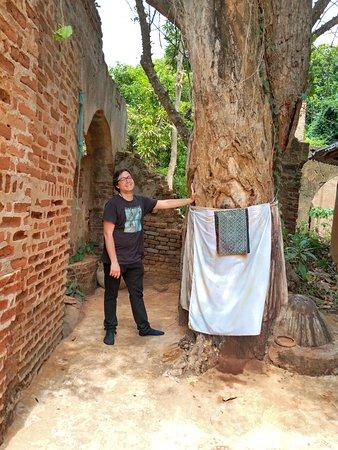Ouidah, Bénin: Iroko tree kpasse loko