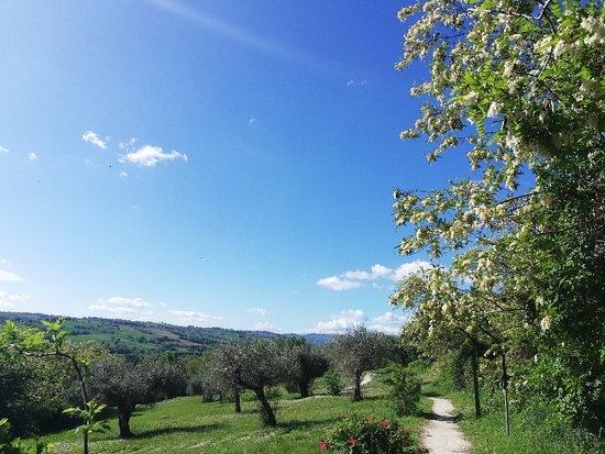 Parco Archeologico di Urbs Salvia