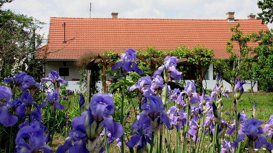 Tiszacsege, المجر: Spring blooms in the garden