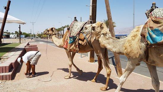 Yusuf's Bedouin Ten