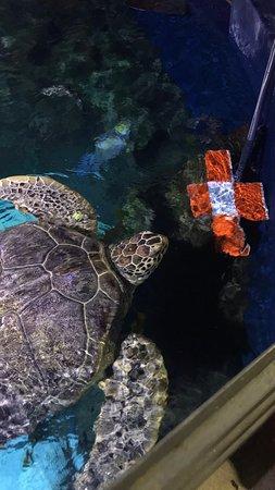 VIP turtle feeding experience