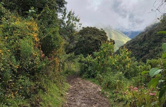 Classic Salkantay Trek 4-Day: Day 2: Cloud forest
