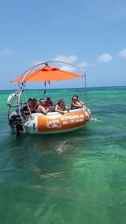 Octopus Aruba Rent A Boat
