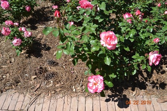 Bellingrath Gardens and Home: Nicole