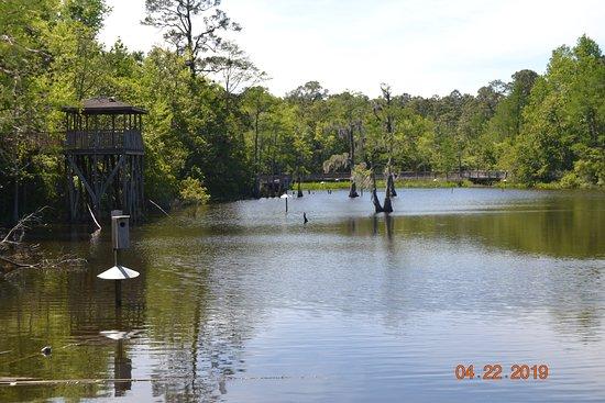 Bellingrath Gardens and Home: Dwight Harrigan Bayou Preserve