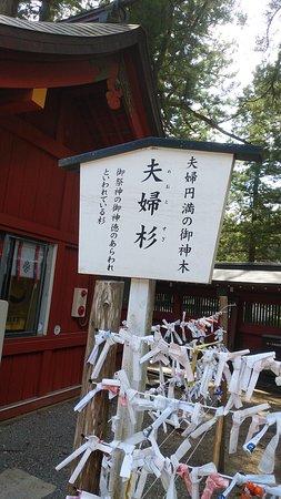 Meotosugi