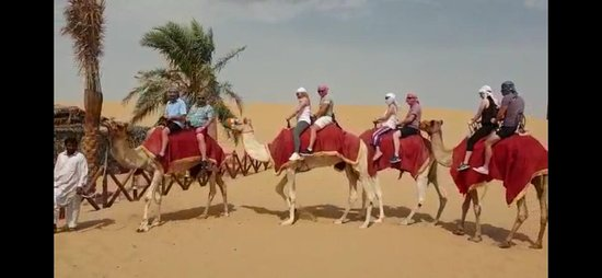 Desert Fun Tourism LLC: Desert Safari Camel Ride Quad Bike  And More
