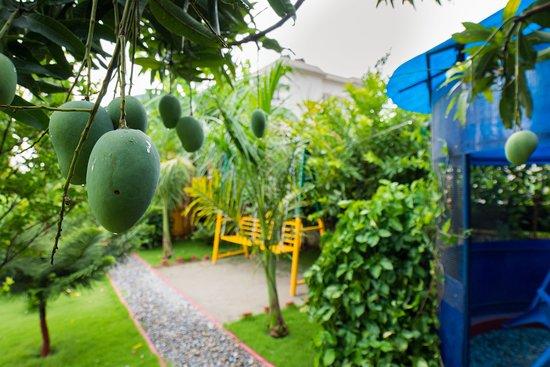 Galaxy Guest House: Season of Mango in Galaxy