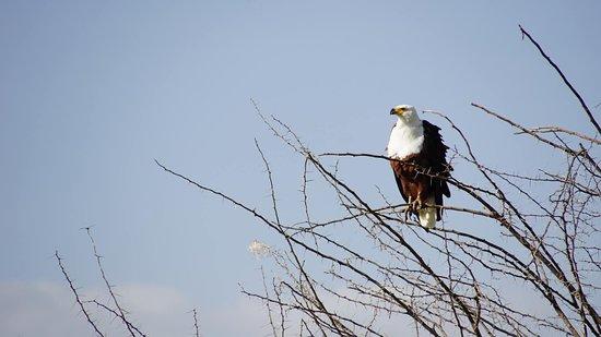 Wildlife Safari, Family Safari, Photographing Safari, Beach Holiday: Fish eagle