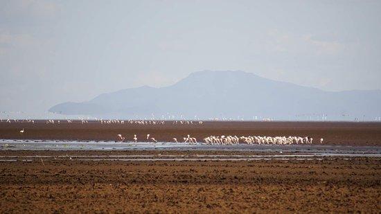 Wildlife Safari, Family Safari, Photographing Safari, Beach Holiday: Lesser flamingos at Lake Manyara.