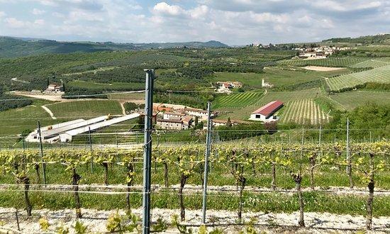 Valpolicella Tour: The land of Amarone: Valpolicella hills