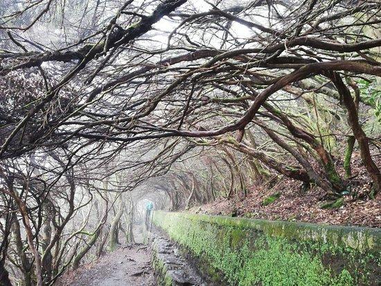 Madeira Photo