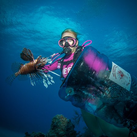 Lionfish hunting - an invasive species in the Caribbean.