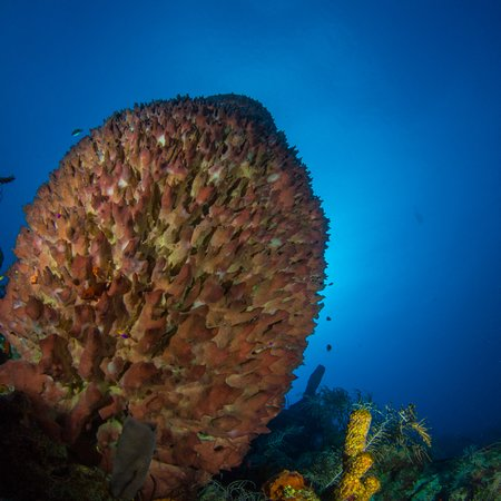 One of the large sponges on the reef.