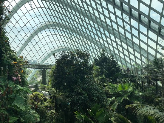Cloud Forest 사진
