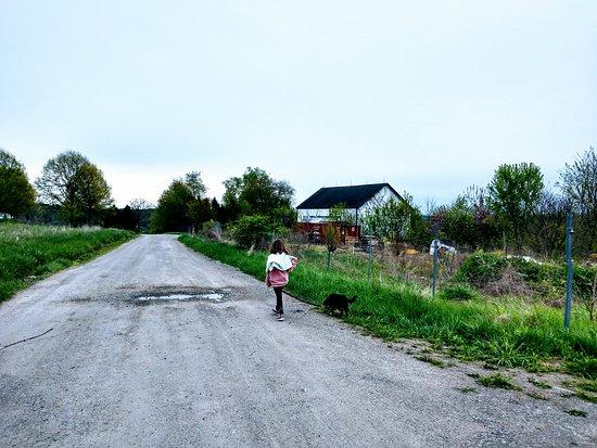 Sutersville照片