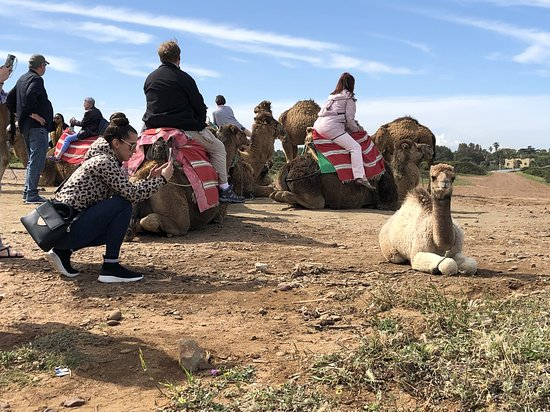 Full-Day Tangier, Morocco Tour from Gibraltar: Camels