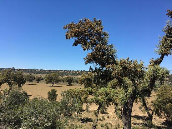 San Martin de Pusa, إسبانيا: Casa Rural Valdepusa