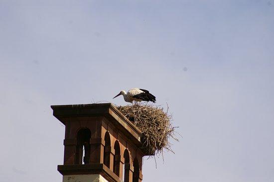 Parc de l'Orangerie: Une cigogne sur la cheminée du Pavillon Joséphine