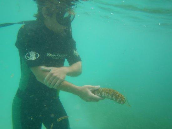 Paradise Scuba & Snorkeling Center: A sea cucumber!