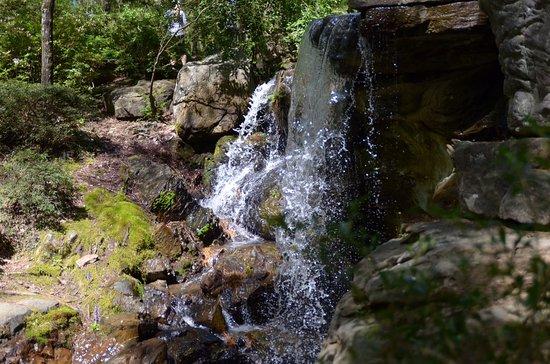 Foto Garvan Woodland Gardens