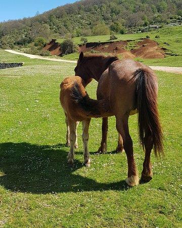 Cottanello, Itálie: ...in compagnia di animali allo stato brado...