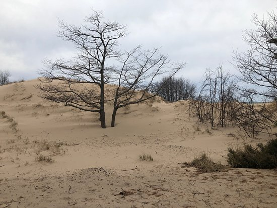 Nordhouse Dunes Wilderness - Manistee National Forest