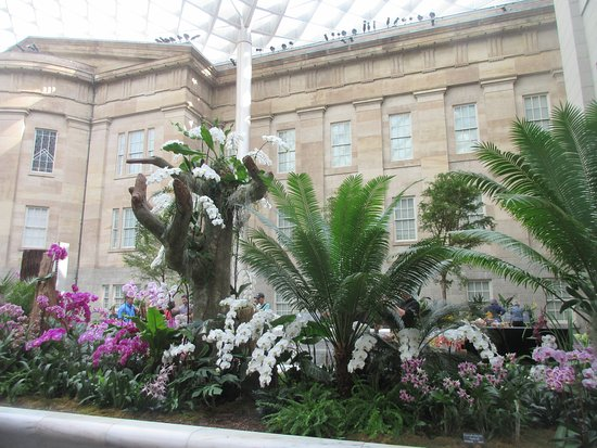 Kogod Courtyard: The new exhibit is orchids from around the world
