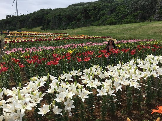 Lily Field Park: Lilies of every color