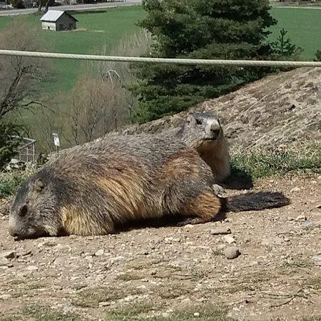 Les marmottes et fontaine pétrifiante à 20mn du brin de paille