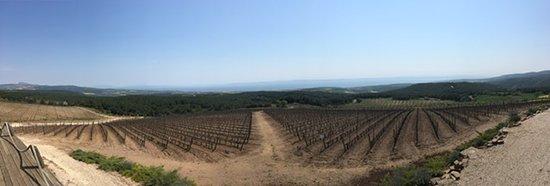 Tekirdağ, Türkiye: Vineyards