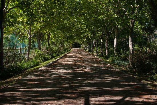 Vlottenburg, South Africa: drive way to the guest house