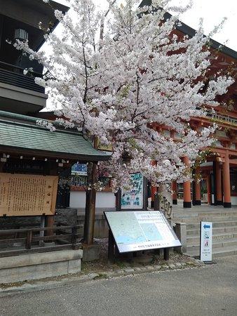 Solemn Shrine in City Center