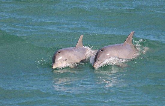 Safari Dolphin Tours