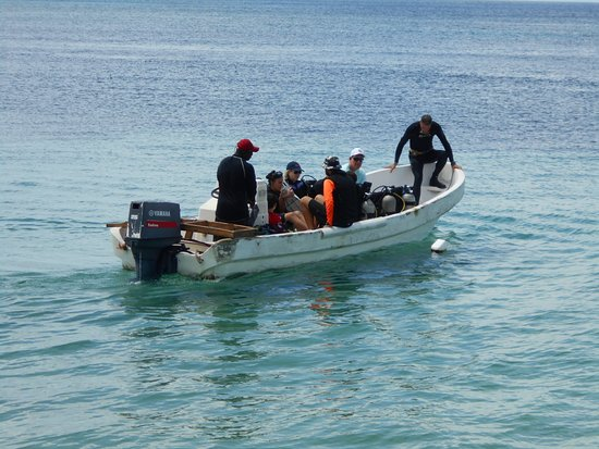 Roatan Dive Center: Family Fun with Try Scuba for the first time