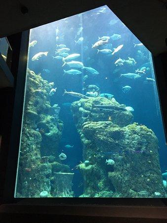 South Carolina Aquarium (Charleston) - 2019 All You Need ...